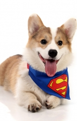Bandana Super Dog - Super Pet